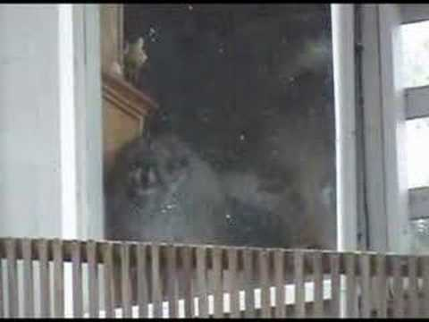 dog barking inside window