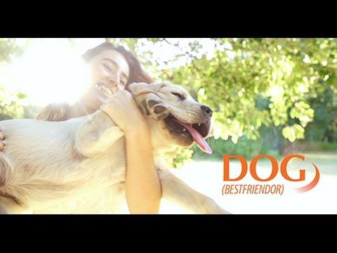Prescription Dog