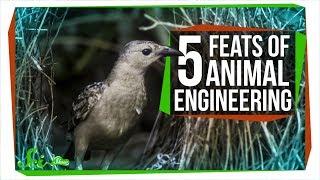 5 Amazing Feats of Animal Engineering