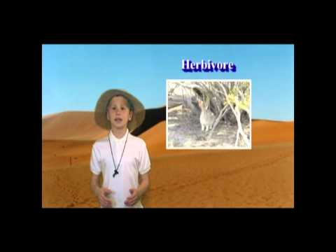 Our Desert Habitat (School Science Project)