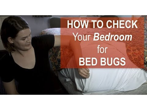 How to Check Your Bedroom for BED BUGS