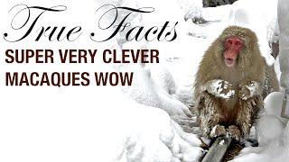 True Facts: Macaques