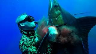 Spearfishing Blue Marlin in Hawaii - Bluewater Hunting
