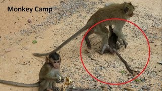 Pity baby monkey, Why big monkey always do like this with baby monkey? Monkey Camp part 1176