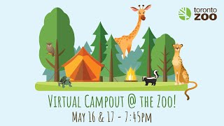 Virtual Campout @ The Toronto Zoo - African Safari Night