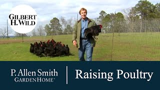 Passion for Raising Poultry | Garden Home (1103)