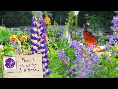 How to attract bees & butterflies to your garden