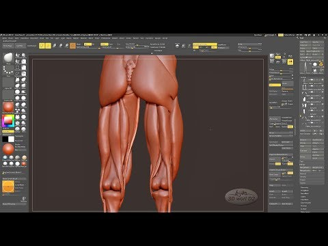 Head and Body Sculpting in ZBrush 8