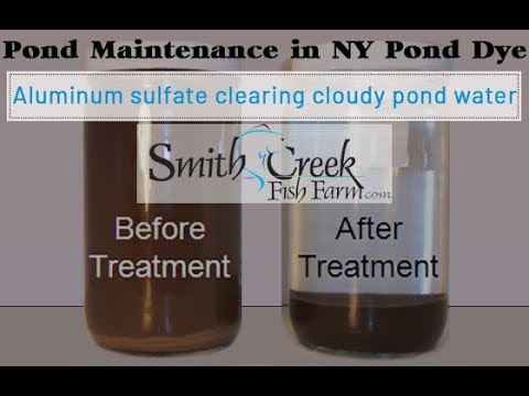 Aluminum sulfate clearing cloudy pond water