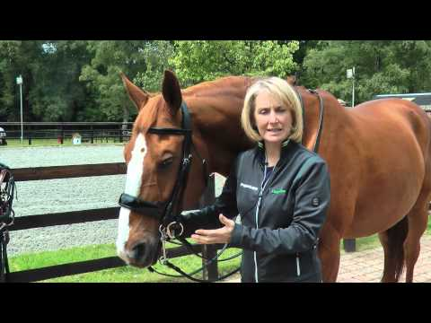 Sprenger – How to correctly fit a bit to a horse's mouth