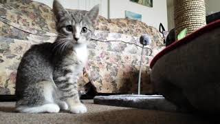 Kitten Shorts #7: First Day Home