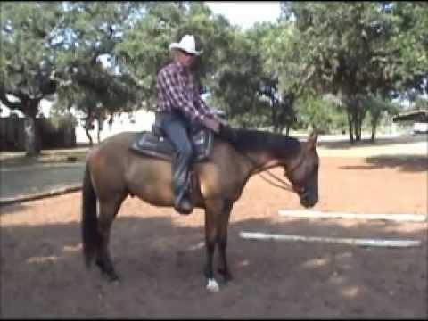 Teach a Horse to Put His Head Down