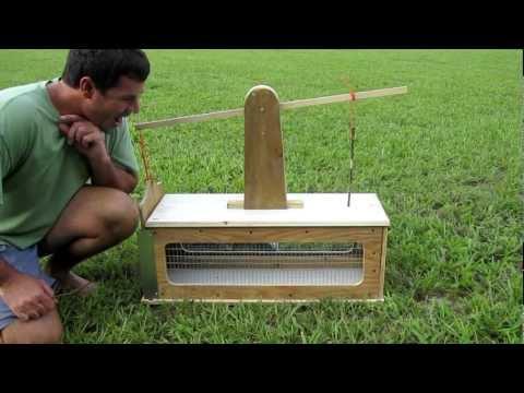 squirrel box trap