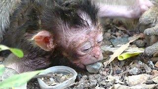 Million SAD & PITY Newborn Baby Dalton VERY Hungry Milk   Dolly Exhausted No Feeding   Sounds Monkey