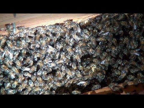 Killer Bee eradication with Rattlesnake Extermination
