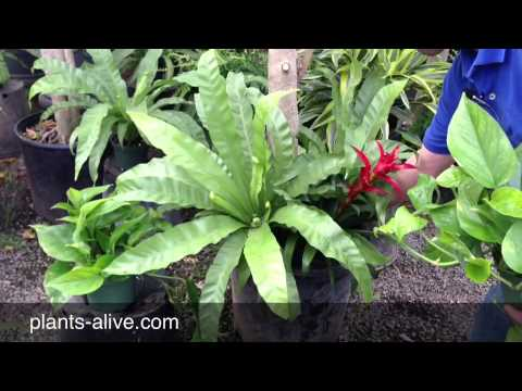 You Tube - Captivating Plant Designs To Make Your Next Event Shine!