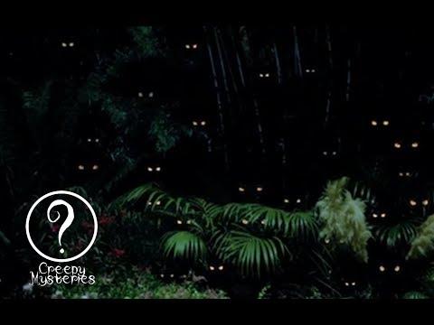 Top 5 Strange Cryptids Of The Amazon Rainforest
