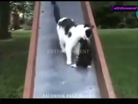 Best Funny Cat Videos Ever 2018
