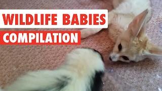 Wildlife Babies Video Compilation 2017
