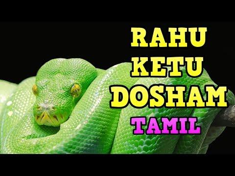 Rahu Ketu Dosham in Tamil | ராகு  கேது  தோஷம் | Rahu Ketu Dosham Effects in Tamil