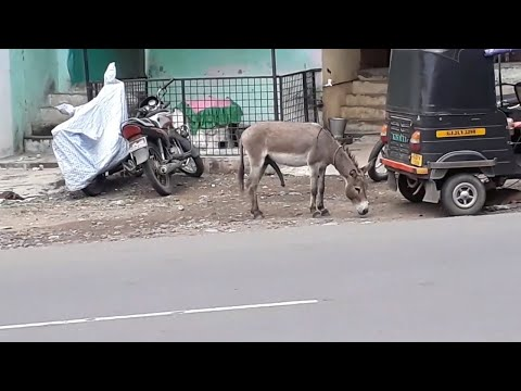 Xxx Mp4 DONKEY IS RELAXING 3gp Sex