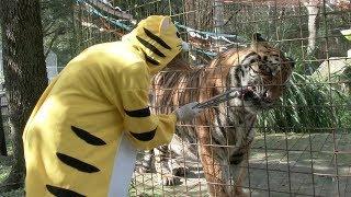 A Tiger Birthday