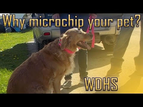 Dog and owner reunited 4 years later - Microchip Your Pet!