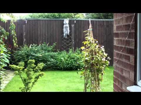 Cat Proof Fencing Enclosure