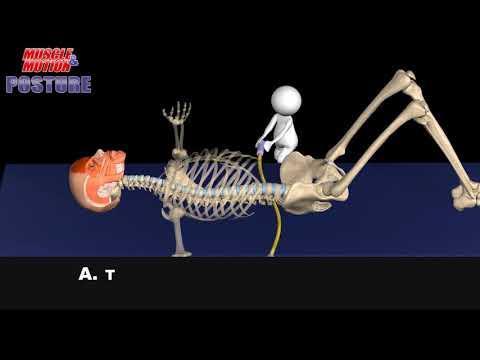 Learning to master proper pelvic positioning. Pelvic tilt, anterior pelvic tilt