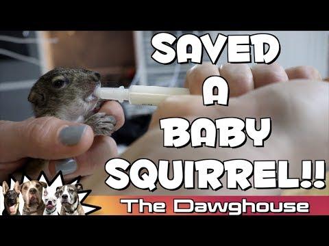 5 week old Baby Squirrel FEEDING TIME