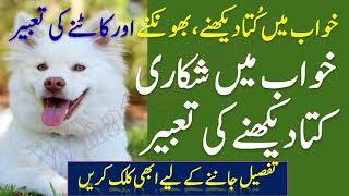 Khwab Mein Kutta Dekhna | A Dog in Dream | خواب میں کتا