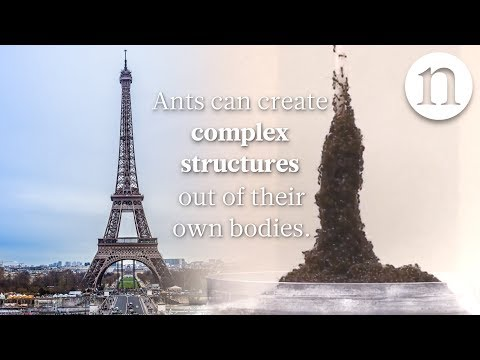Ant architecture: The simple rules of ant construction