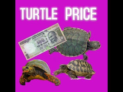 Price Of Aquarium Turtles in India ENTERTAINMENT  कछुआ की कीमत भारत मे