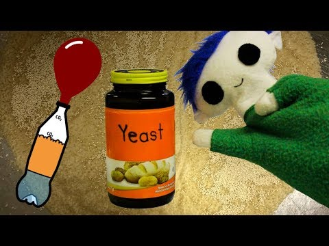 The Science of Yeast | Science for Kids