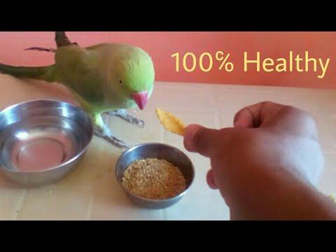 Healthy diet for parrot in summer /world of birds