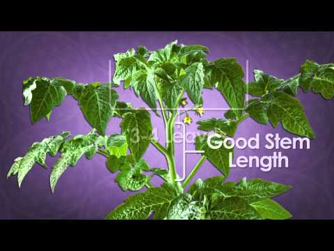 How to Clone | Cloning Plants | Cloning Hydroponically | Cloning Tutorial
