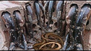 Creative Deep Hole Brick Eel Trap - Amazing Boys Catch Eel With 8 Brick Hole Eel Trap