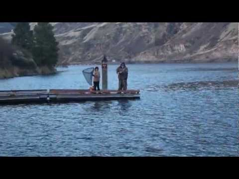Steelhead fishing on the columbia river