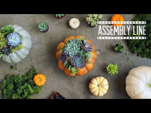 DIY Pumpkin Succulents  | Assembly Line