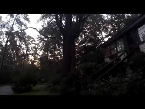041 the tree