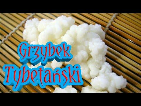 82.Grzybek Tybetański Probiotyk !!!
