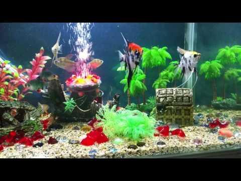 Fish tank decoration.