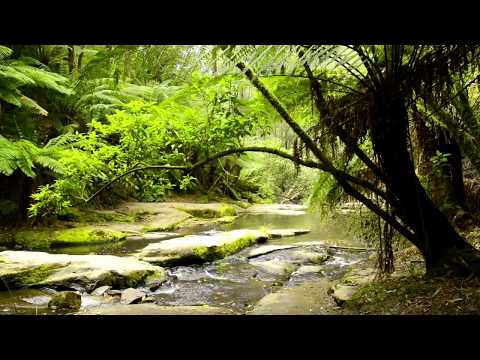🎧 Forest Nature Sounds Australia - Rainforest, Jungle Sounds With Relaxing Flowing Creek Ambience