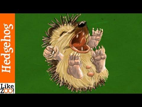 How long do hedgehogs hibernate? - LikeZOO!