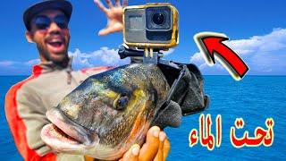 لن تصدق ما سجلت الكاميرا !!! عند تثبيتها على راس السمكة ?