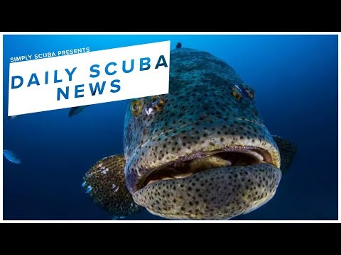 Daily Scuba News - Florida Upholds Ban On Goliath Grouper