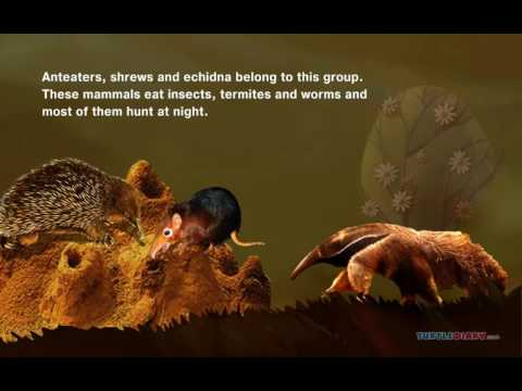 Insect Eating Mammals   Science Video for Kids