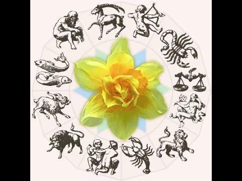 Цветы Для Женщин Под Знаком Овен