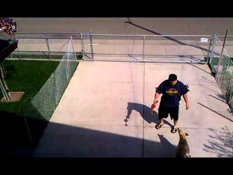 Dog jumps over the gate!