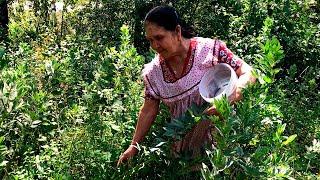 Habas Guisadas con Chile Verde De Mi Rancho a Tu Cocina